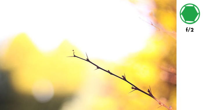 A photo of a tree branch in the foreground and autumn leaves in the background, taken with f/2 exposure