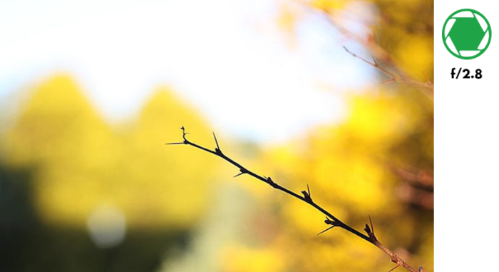 A photo of a tree branch in the foreground and autumn leaves in the background, taken with f/2.8 exposure