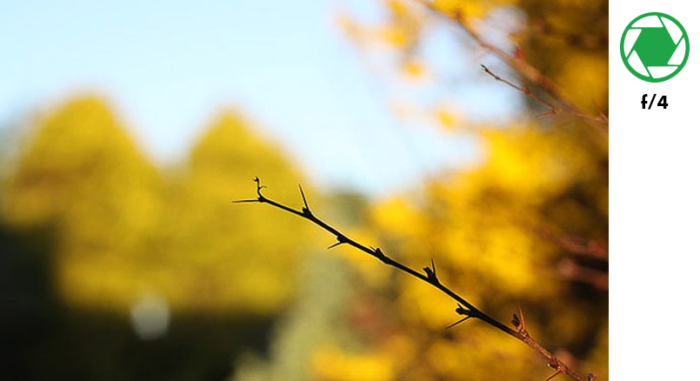 A photo of a tree branch in the foreground and autumn leaves in the background, taken with f/4 exposure