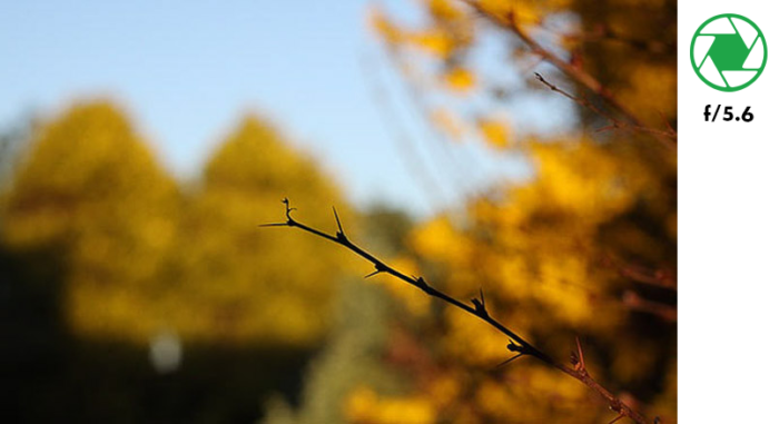 A photo of a tree branch in the foreground and autumn leaves in the background, taken with f/5.6 exposure