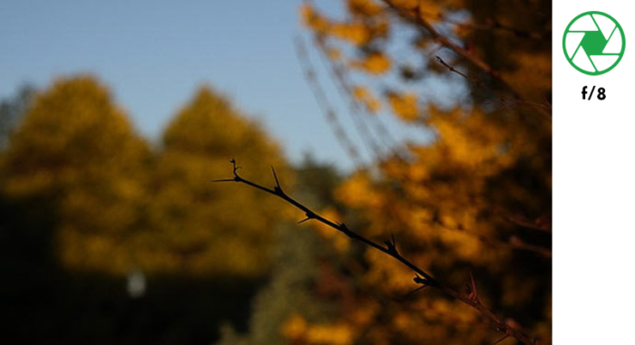 A photo of a tree branch in the foreground and autumn leaves in the background, taken with f/8 exposure