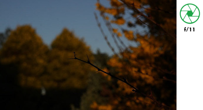 A photo of a tree branch in the foreground and autumn leaves in the background, taken with f/11 exposure