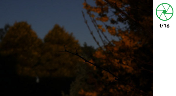 A photo of a tree branch in the foreground and autumn leaves in the background, taken with f/16 exposure