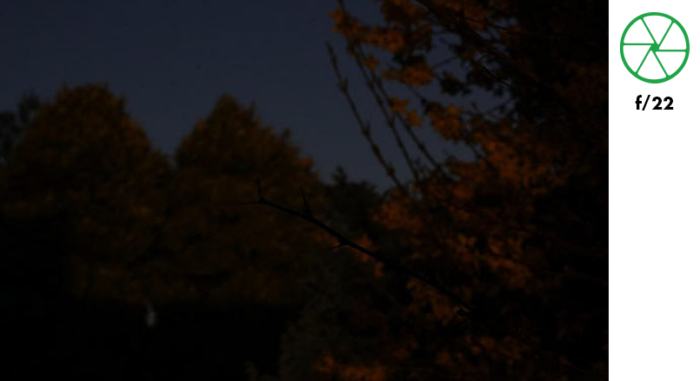 A photo of a tree branch in the foreground and autumn leaves in the background, taken with f/22 exposure