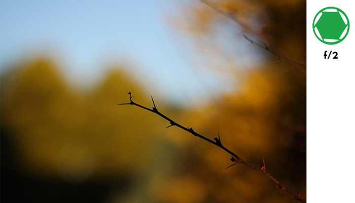 A tree branch in focus with blurry background of autumn trees taken with f/2 aperture