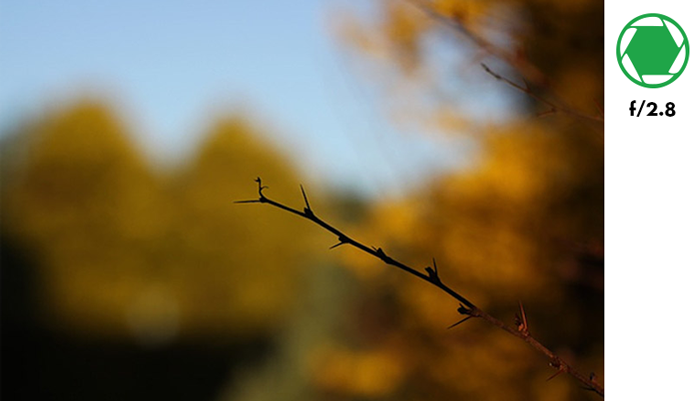 A tree branch in focus with blurry background of autumn trees taken with f/2.8 aperture