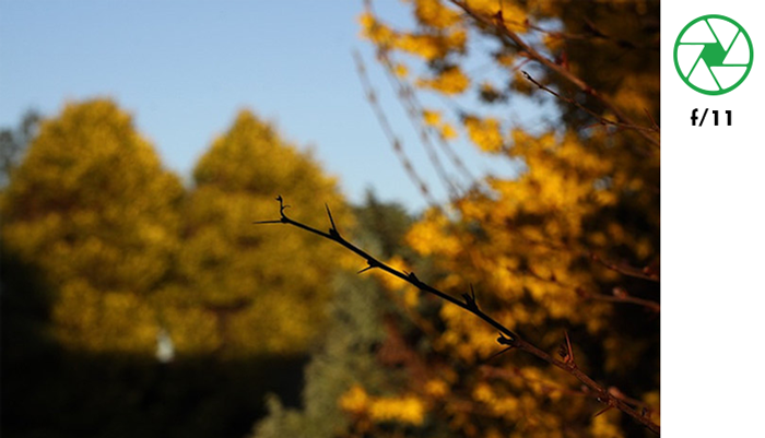 A tree branch in focus with blurry background of autumn trees taken with f/11 aperture