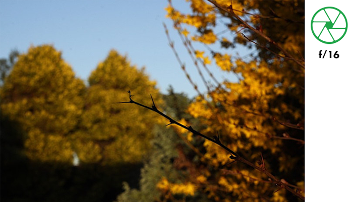 A tree branch in focus with blurry background of autumn trees taken with f/16 aperture