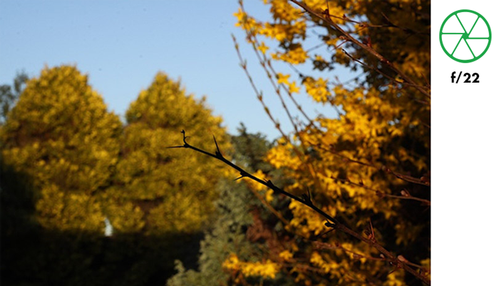 A tree branch in focus with blurry background of autumn trees taken with f/22 aperture