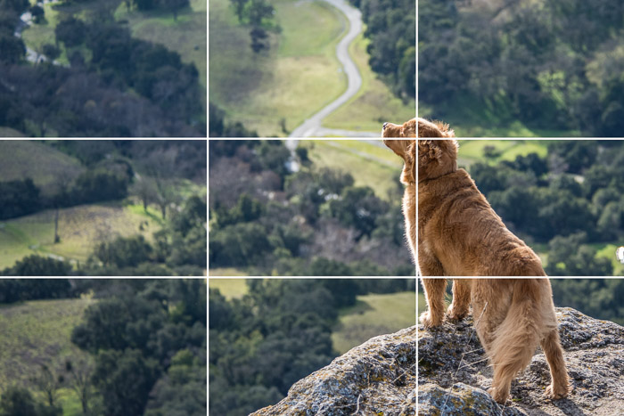 What is the Rule of Thirds? (And How to Use it in Photos!)