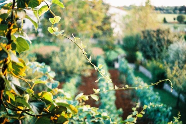 Photo of a garden taken on film