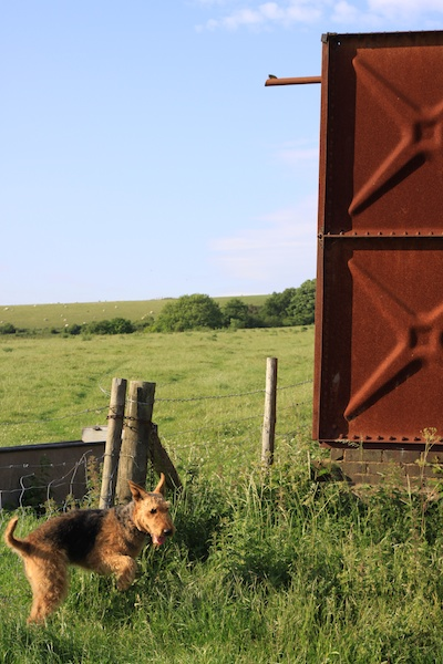 Photo of a dog in a green field near a metal construction