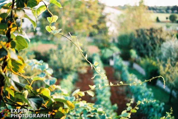 Portfolio Export Print 47 How to Achieve Beautiful Bokeh