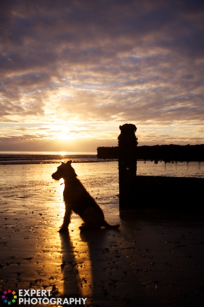 A sunset with a silhouette of a dog