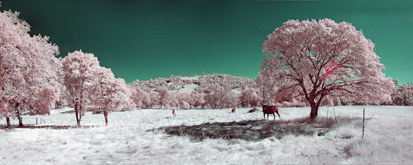 Infrared Phtography1 Trick Photography and Special Effects eBook Photos