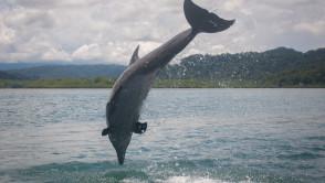 1_dolphin