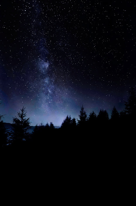 Atmospheric shot of a star filled sky over a forest at night