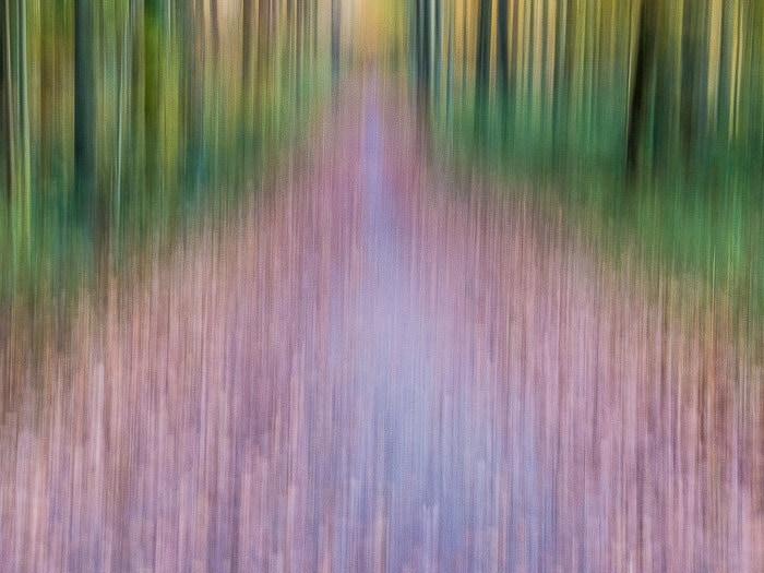 Paisagem abstrata na floresta de Sonian com borrão de movimento criativo
