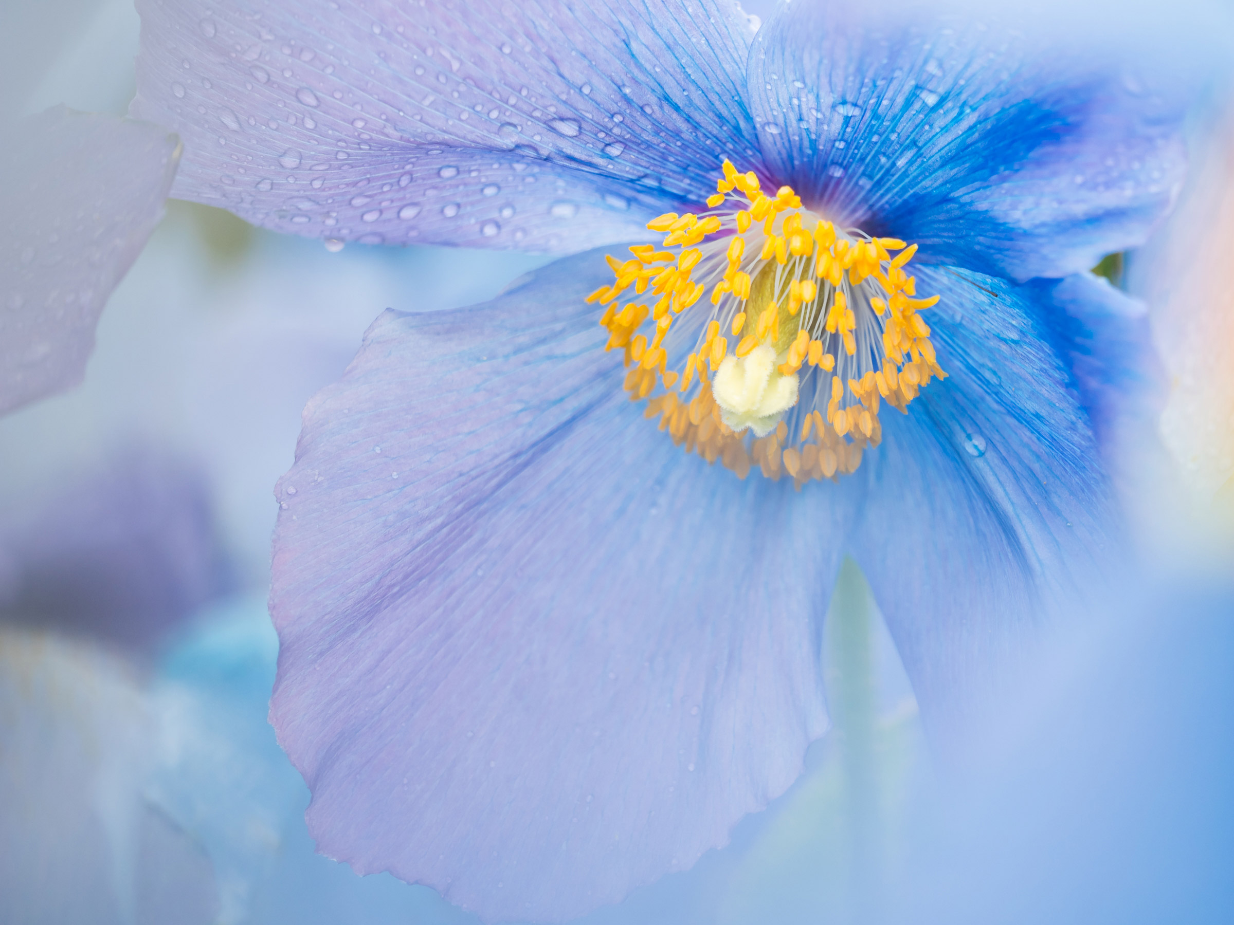 macro image of flower with moisture drops