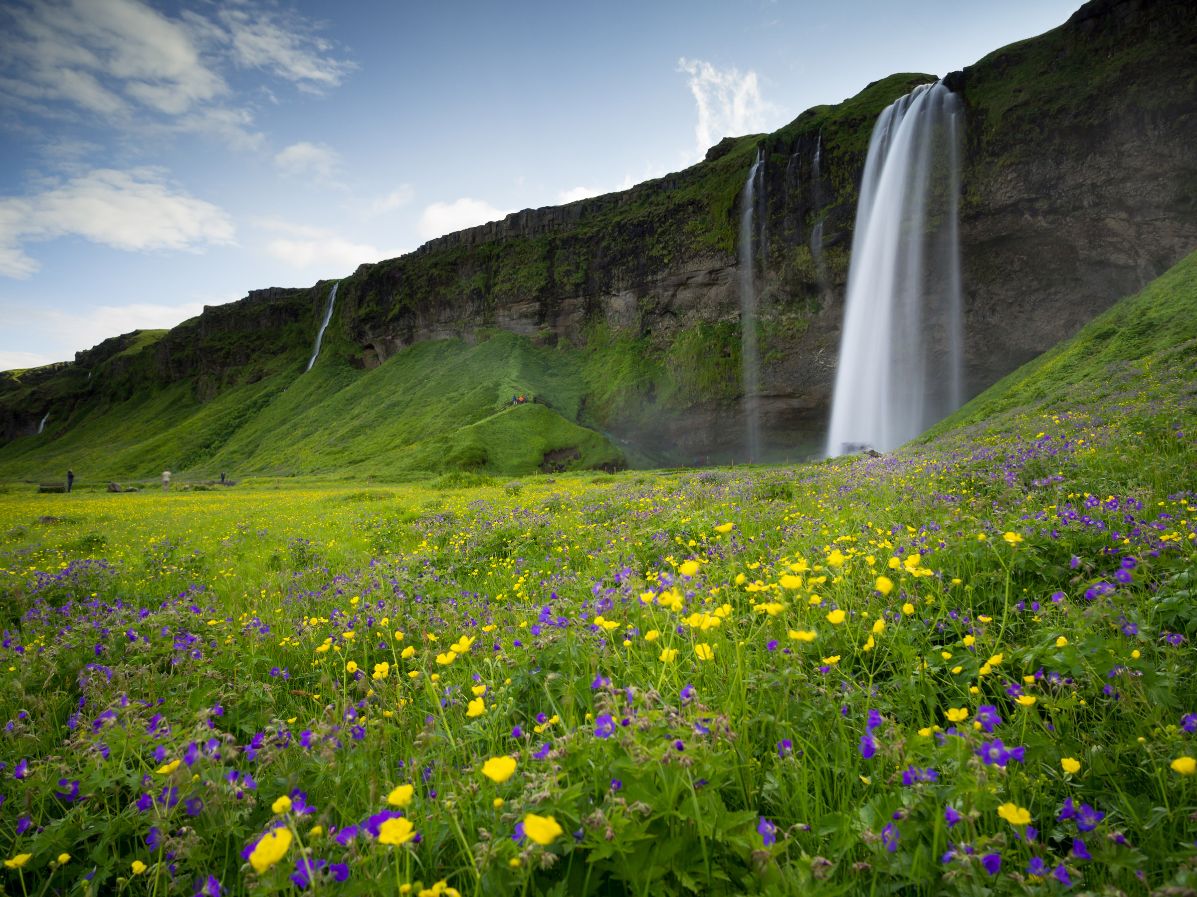 Icelandic waterfalls and flowers