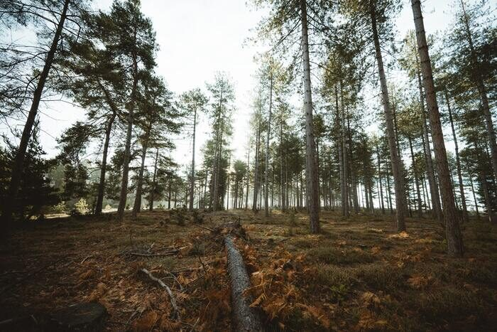 Photo of trees in a forest shot with wide angle lens