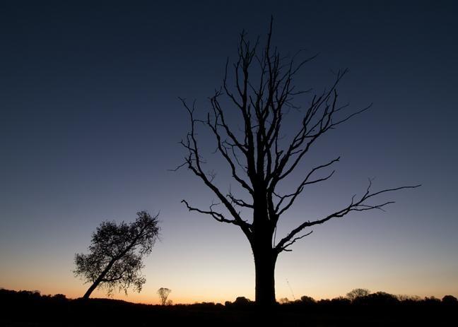 Una imagen que muestra siluetas de árboles.