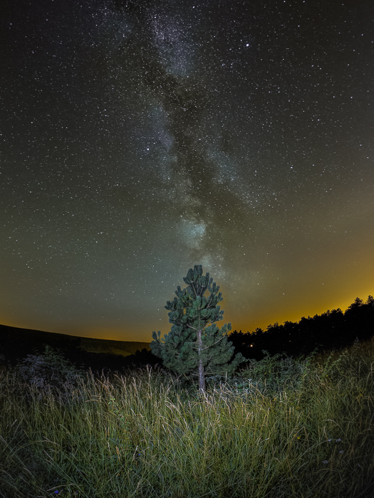 Fisheye Lens Photography: small tree with Milky Way in the background