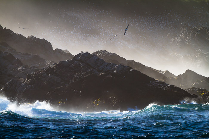 Great image of a flock of seagulls in flight over rocks and waves