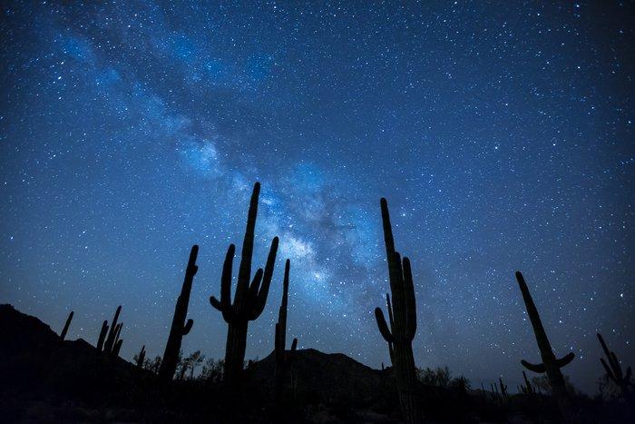 Foto impressionante de astrofotografia de um céu estrelado sobre as silhuetas de cactos