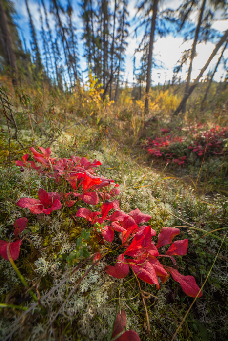 Forest photography close up of tundra flowers