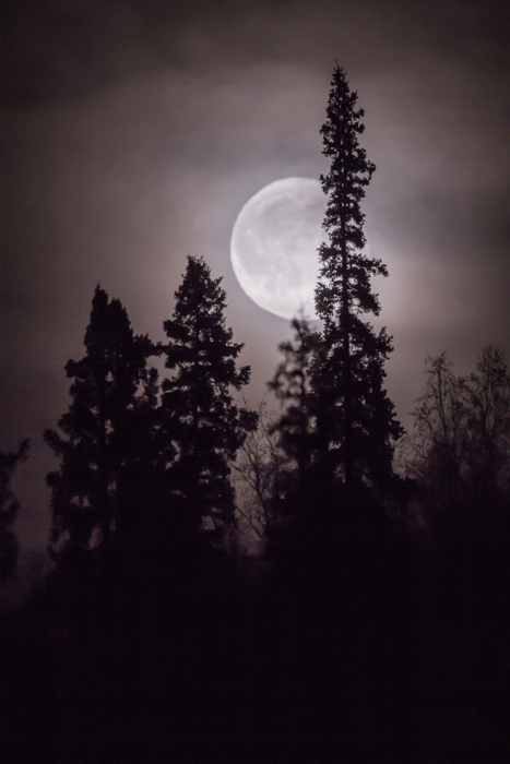 Forest photography of the silhouettes of a tree with full moon in background