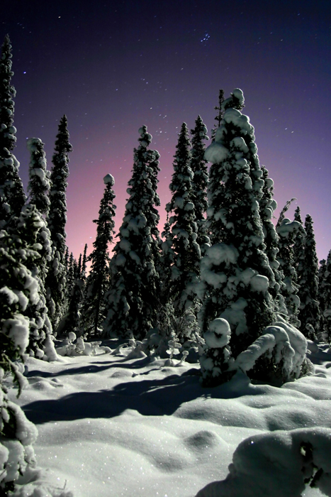Forest photography of snow-covered trees during twilight with stars above
