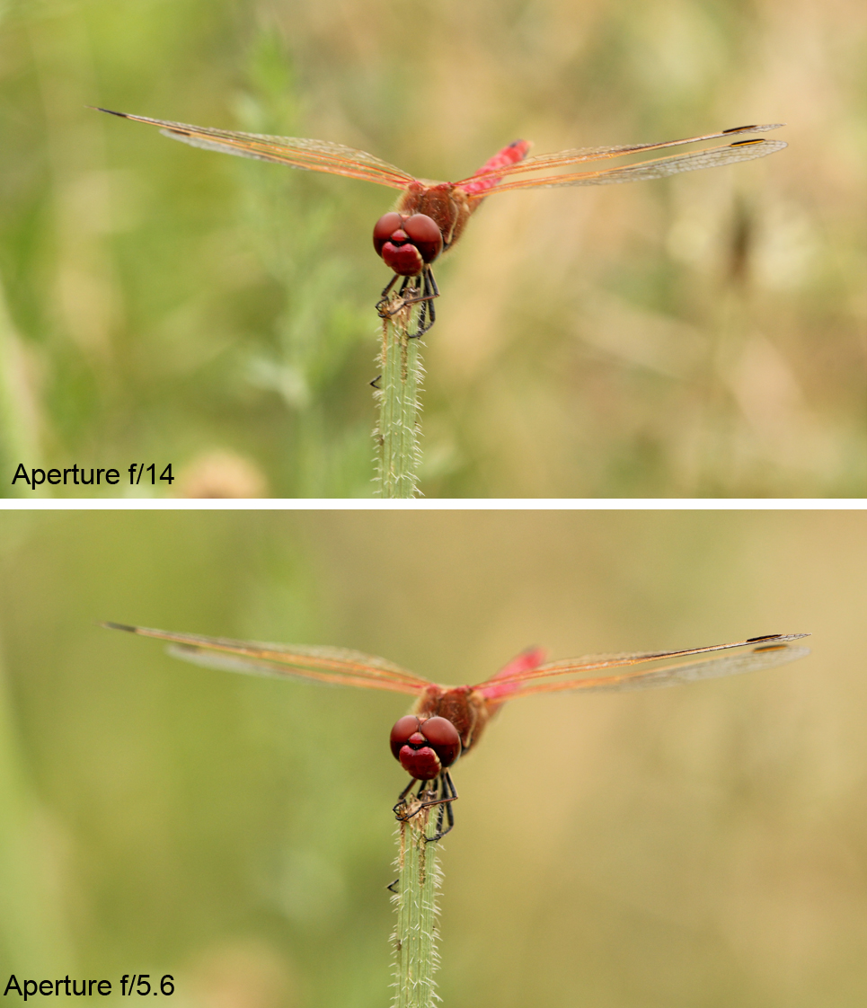 Settings for Macro Photography: Showing the difference in background blur between f/14 and f/5.6