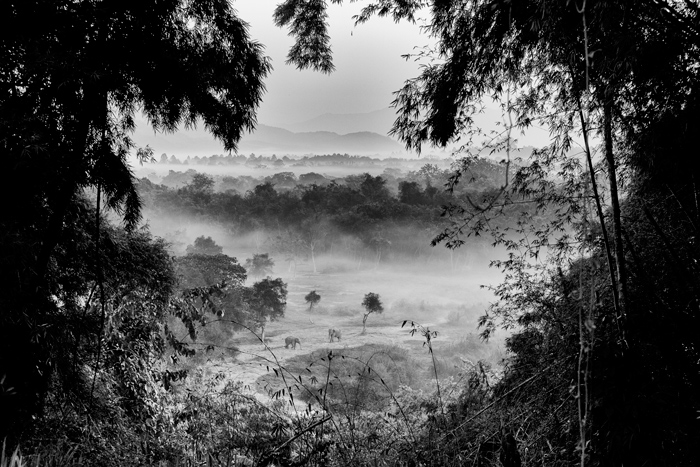 Black and white landscape image peering out from heights in a jungle, elephants in the distance