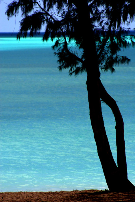 Coastal photography: tree in silhouette with bright blue water in background