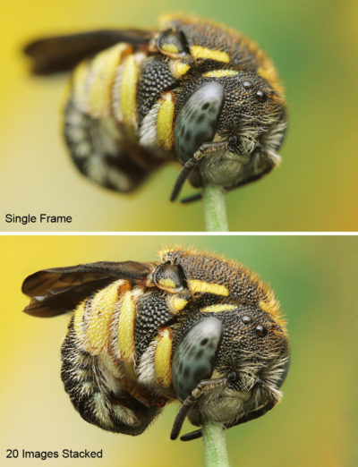 Best Macro Accessories - Image Stacking from a Focus Rail