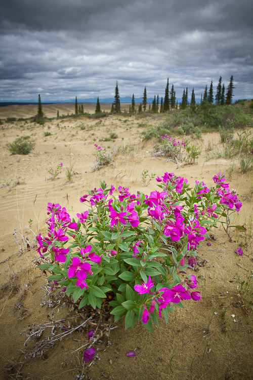 Example of evaluative metering in landscape photography exposure with heavy clouds over a vibrant desert flower