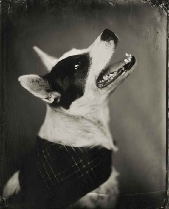 A dog photographed using an alternative black and white photographic process