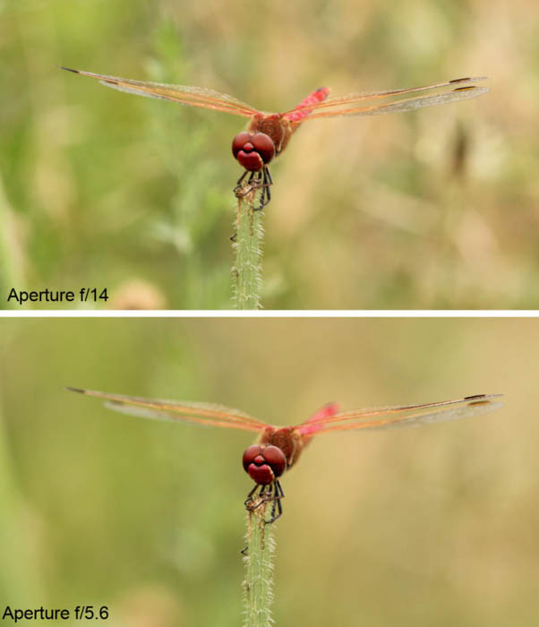 Using a photograph of a dragonfly to show the difference in depth of field between two different f/stops.