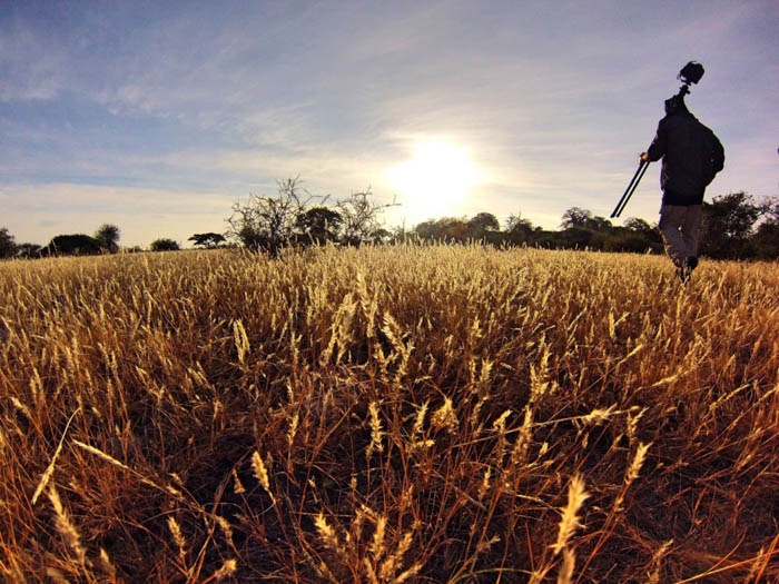 a photographer carrying a travel tripod in a corn field