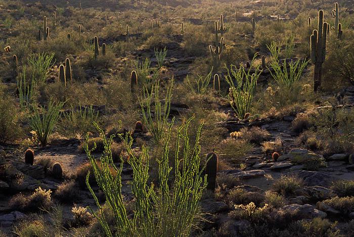 Fotografía de la flora del desierto