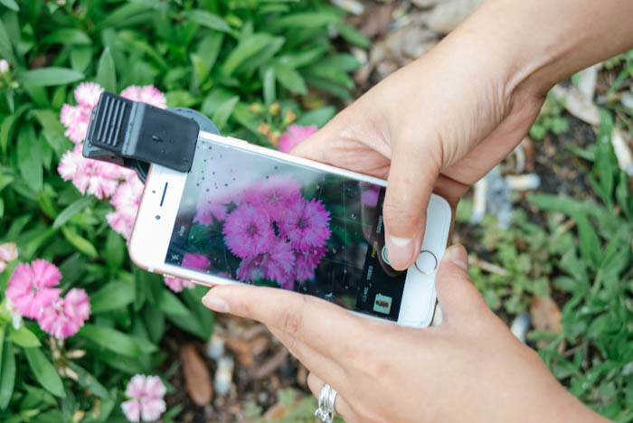 A person taking a macro photo of a flower with their iphone