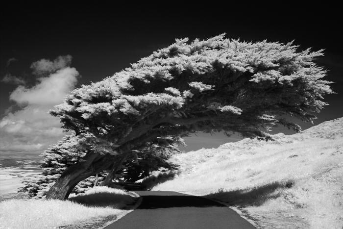 Uma fotografia de uma árvore inclinada sobre um caminho para fotografia em preto e branco