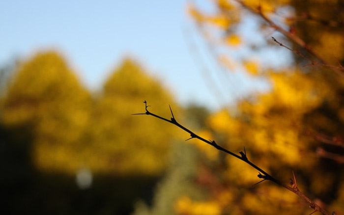 a well exposed shot of an autumn branch and trees