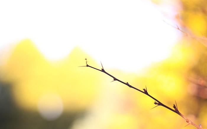 an underexposed shot of an autumn branch