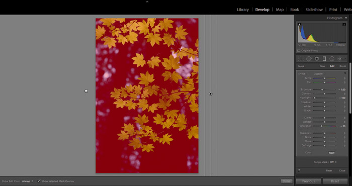 Using an image of leaves to show how masks and brushes work in Lightroom