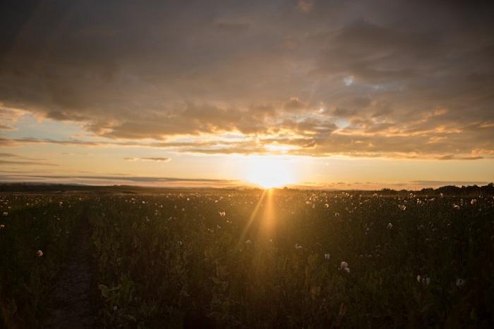 Evening landscape at sunset