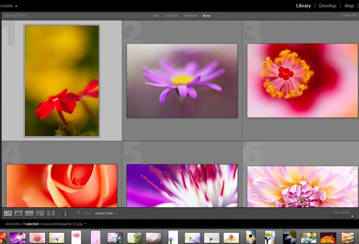 A screenshot of editing macro photography