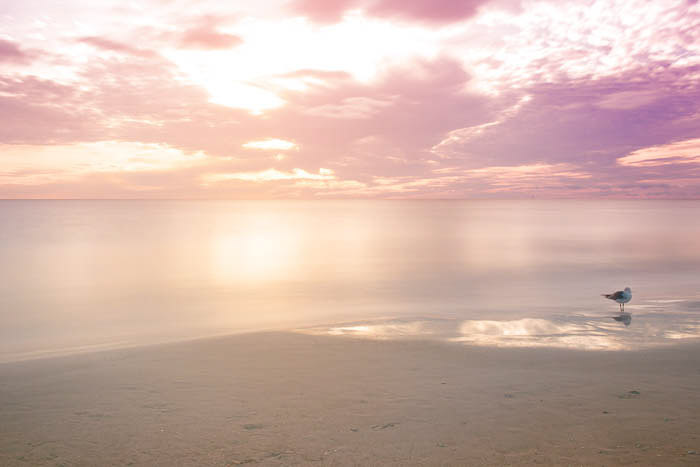 A beach at sunset with smooth sea and a pink sky full of clouds with a seagull off to the right