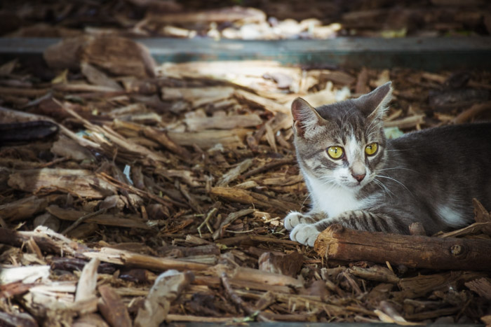 stray cat among leaves and fallen branches